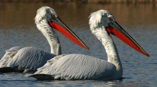 Amazing Places in Montenegro - Bird Watching